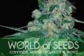 Первое в этом году пополнение от World Of Seeds