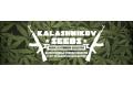 Горячие новинки от Kalashnikov Seeds